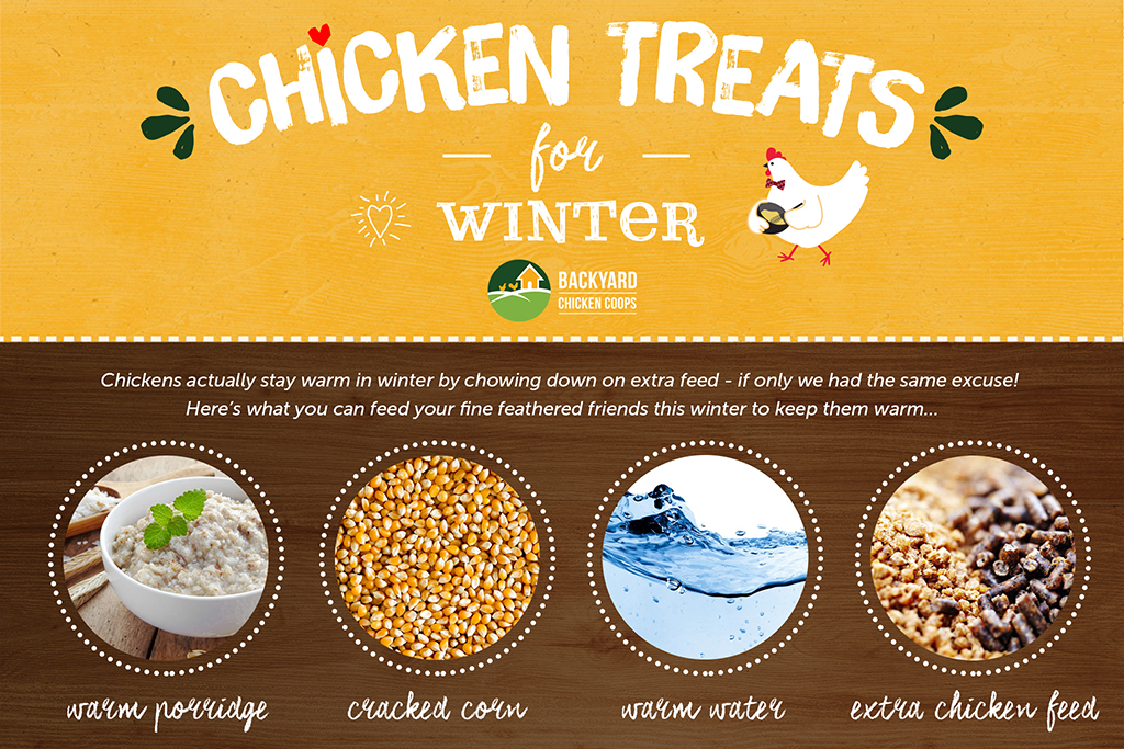 Chicken treats for winter