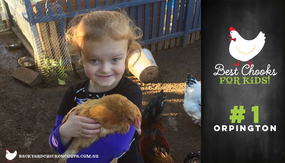 Orpington chickens are great for children