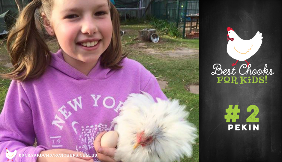 Pekin chickens are great for children
