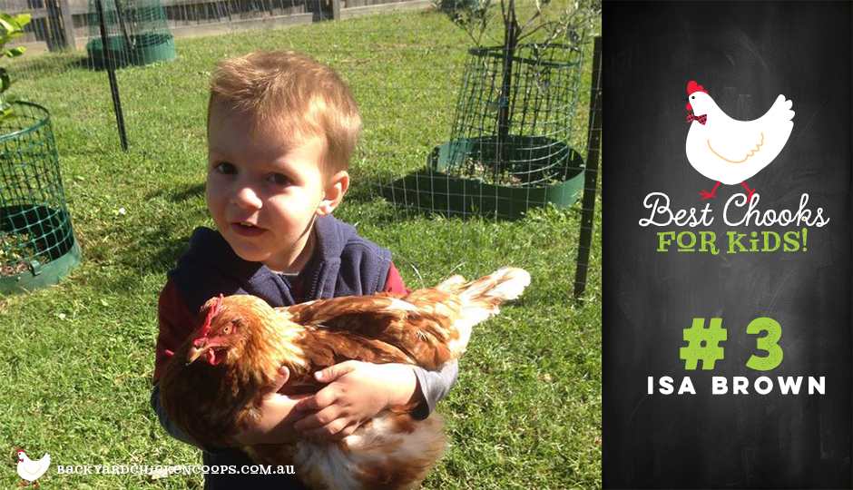 ISA Brown chickens are great for children