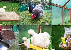 essential chicken coop accessories
