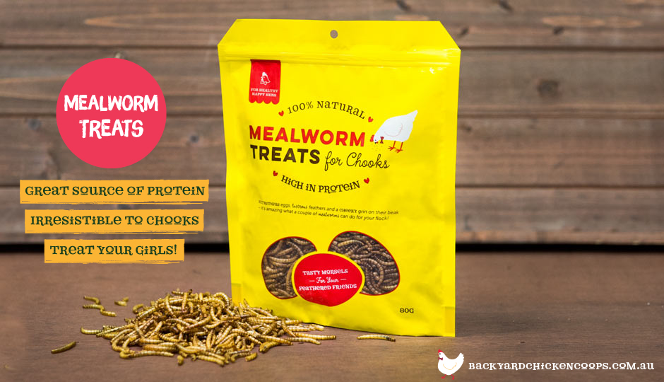 "Mealworms on display with text, ""New! Mealworm treats. Great Source of Protein. Irresistable to chooks. Treat your girls."""
