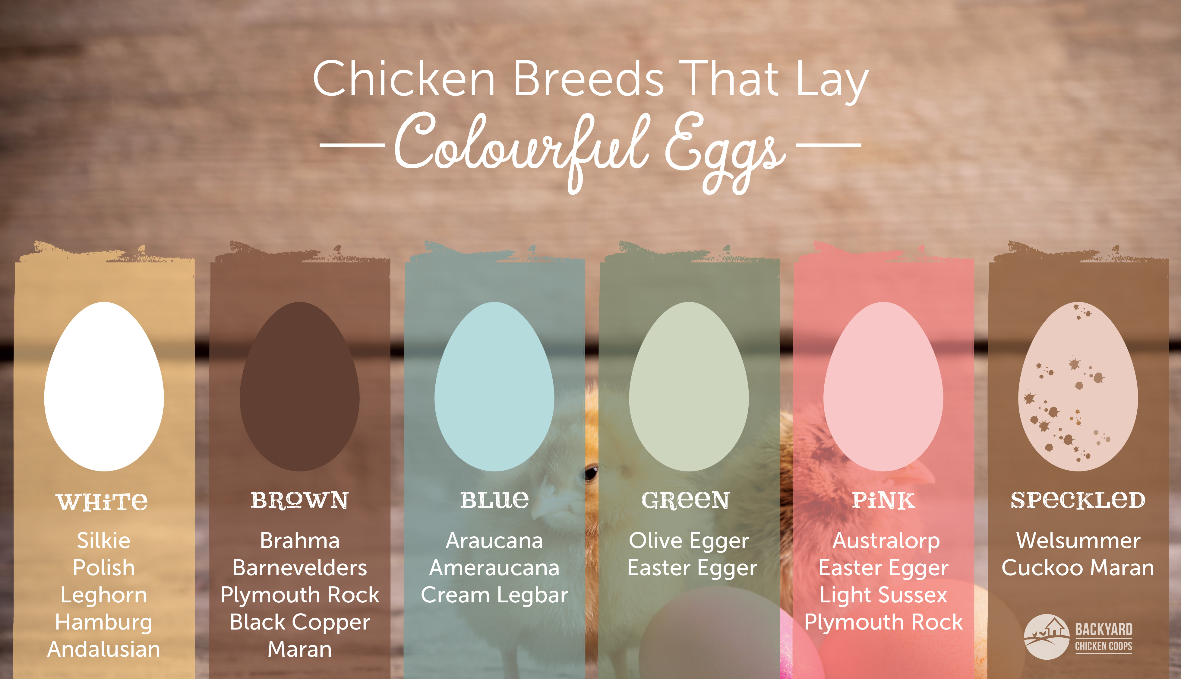 Chicken Breeds That Lay Different Coloured Eggs