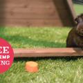 pet enclosure guinea pig free hemp bedding